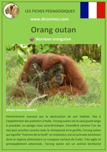 fiche animaux pedagogique singe orang outan pdf a telecharger et a imprimer