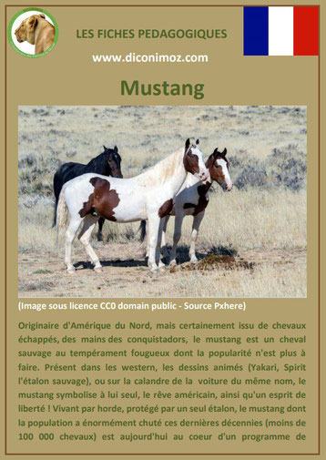 fiche cheval chevaux mustang origine caractere comportement robe race