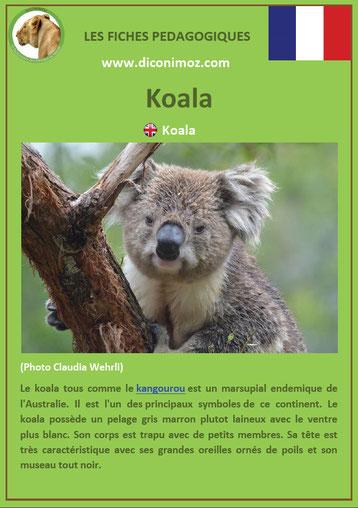 fiche animaux australie pdf koala a telecharger et a imprimer