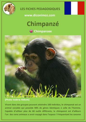 fiche animaux pedagogique singe chimpanze pdf a telecharger et a imprimer