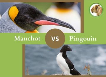 ne confondez plus le manchot et le pingouin