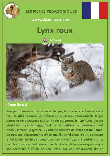 fiche animal animaux canada lynx roux à télécharger et a imprimer