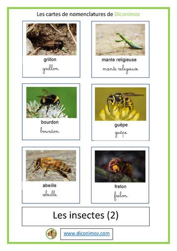cartes de nomenclature ecriture cursive et scriptanimaux insectes 2