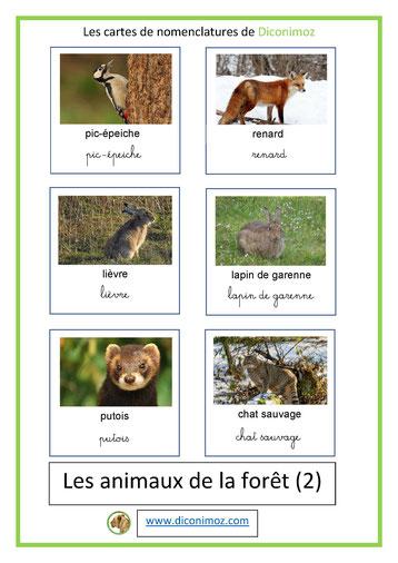 cartes de nomenclature ecriture cursive et script animaux foret 2