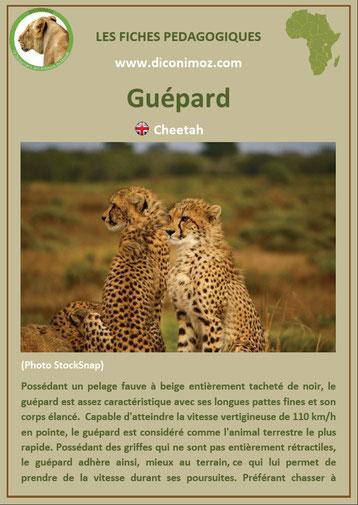 fiche animaux pdf guepard afrique imprimer telecharger