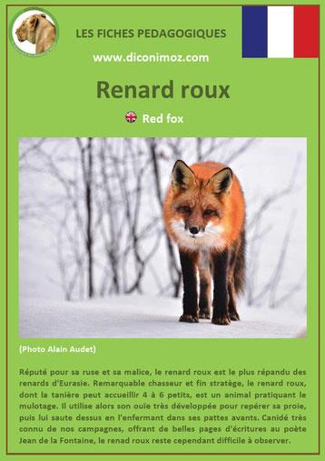 fiche animaux pdf canides renard roux a telecharger et a imprimer