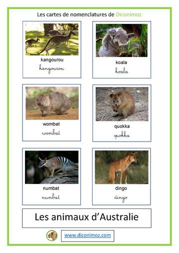 cartes de nomenclature ecriture cursive et scriptanimaux australie