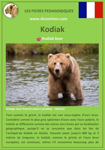 fiche animaux pdf ours kodiak a telecharger et a imprimer