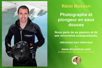 interview remi masson photographe plongeur eaux douces