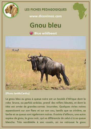 fiche animaux pdf gnou bleu afrique imprimer telecharger