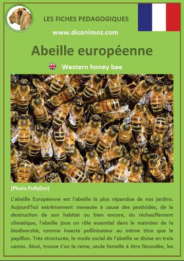 fiche animaux pdf insectes abeille europeenne à telecharger et a imprimer