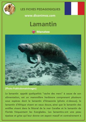 fiche animaux pdf lamantin mammiferes marin a telecharger et a imprimer