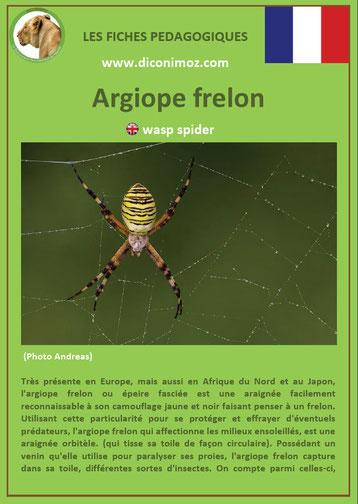 fiche animaux pdf insectes argiope frelon à telecharger et a imprimer