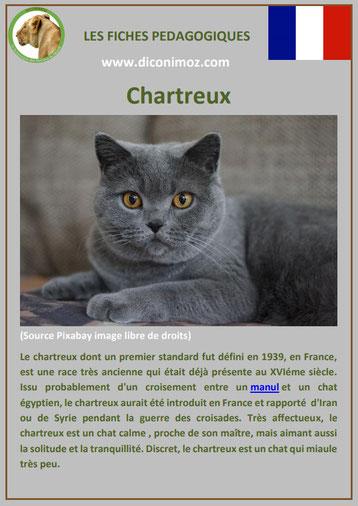 fiche animal animaux de compagnie chat chartreux comportement caractere origine