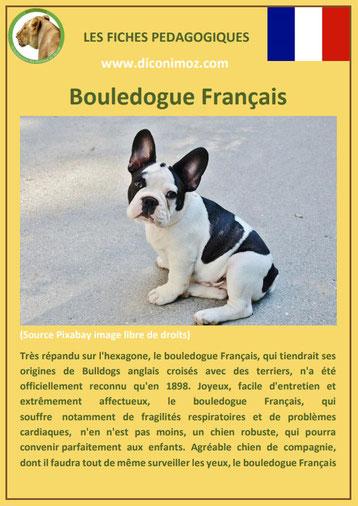 fiche chien pdf bouledogue francais caractere origine comportement poil