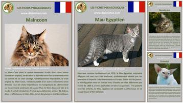fiches animaux sur les races de chats à télécharger et à imprimer