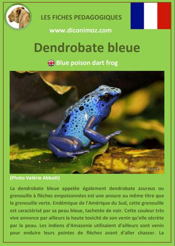 fiche animaux amazonie pdf pedagogique dendrobate bleue a telecharger et a imprimer