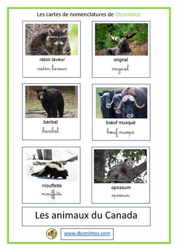cartes de nomenclature ecriture cursive et script animaux canada