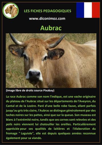 fiche animaux ferme vache aubrac origine caractere comportement robe race