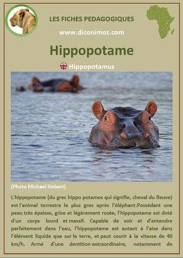 fiche animaux pdf hippopotame afrique imprimer telecharger