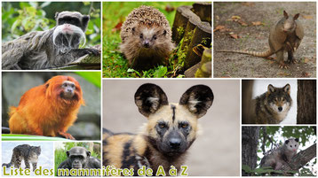 fiches animaux liste des mammiferes