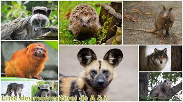 fiches animaux liste des mammiferes poids taille habitat alimentation longevite repartition