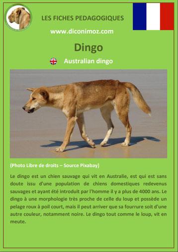 fiche animaux pdf australie dingo a telecharger et a imprimer