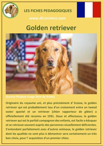 fiche chien pdf golden retriever labrador caractere origine comportement poil