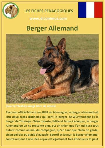 fiche animal animaux chien berger allemand comportement origine caractere sante