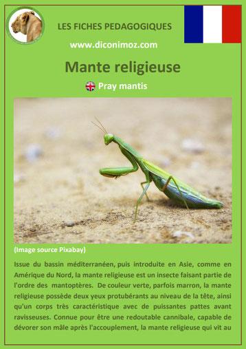 fiche animaux pdf insecte mante religieuse à telecharger et a imprimer