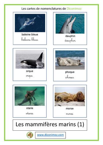 cartes de nomenclature ecriture cursive et scriptanimaux marins