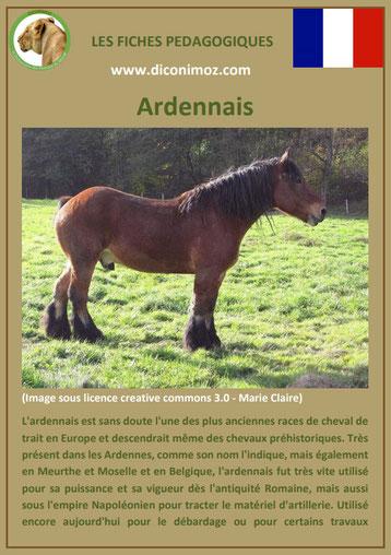 fiche cheval chevaux ardennais origine caractere comportement robe race
