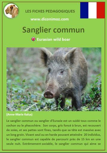 fiche animal pedagogique animaux de nos forets pdf sanglier commun