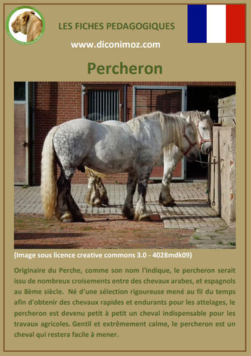 fiche cheval chevaux percheron origine caractere comportement robe race