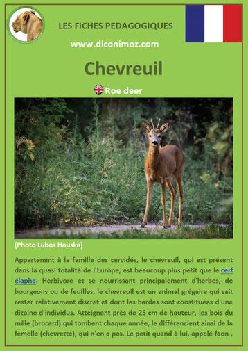 fiche animaux pedagogique pdf chevreuil a telecharger et a imprimer