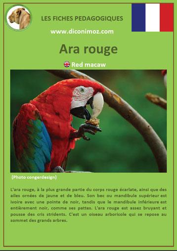 fiche animaux oiseaux pedagogiques ara rouge a telecharger et a imprimer
