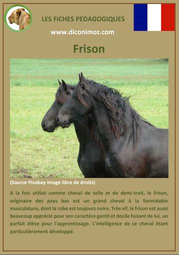 fiche cheval chevaux frison origine caractere comportement robe race