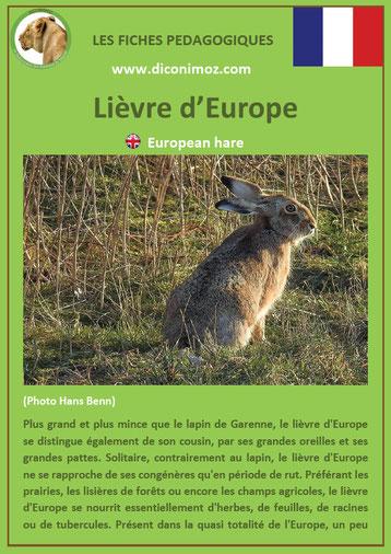 fiche animaux de nos forets pdf lievre europe a telecharger et a imprimer
