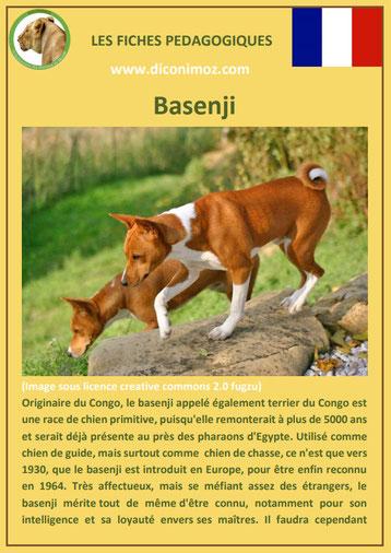 fiche chien race basenji origine comportement caractere
