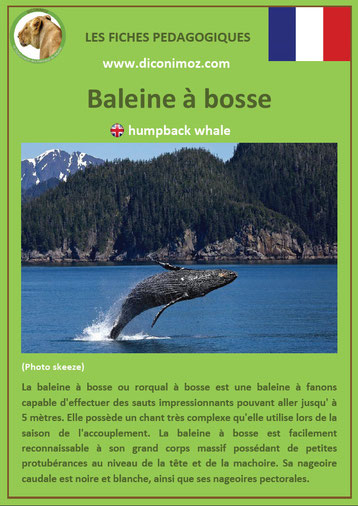 fiche animaux pdf baleine a bosse mammiferes marin a telecharger et a imprimer