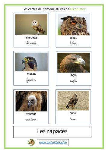 cartes de nomenclature ecriture cursive et script animaux rapaces