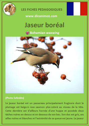 iche animaux pdf pedagogique oiseaux jaseur boreal a telecharger et a imprimer