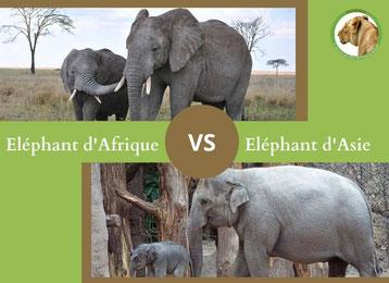 ne condondez plus l'éléphant d'afrique et l'éléphant d'asie
