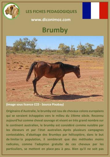 fiche cheval chevaux brumby australien origine caractere comportement robe race