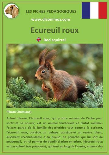fiche animaux ecureuil roux taille poids habitat longevite repartition comportement