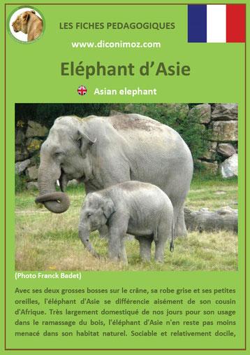 fiche animaux pdf asie elephant à telecharger et a imprimer