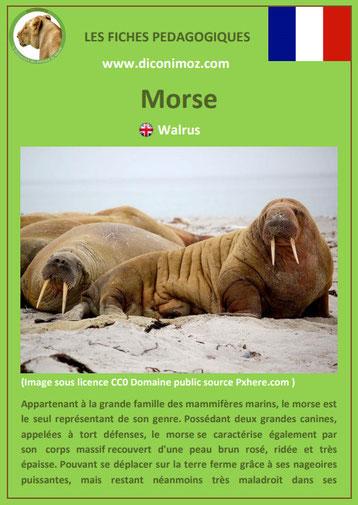fiche animaux pedagogiques mammiferes marins pdf dauphin morse a telecharger et a imprimer