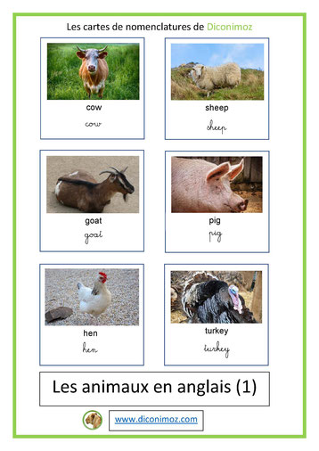 carte nomenclature animaux en anglais