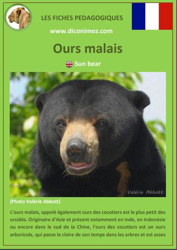 fiche animaux pdf ours malais cocotiers a telecharger et a imprimer