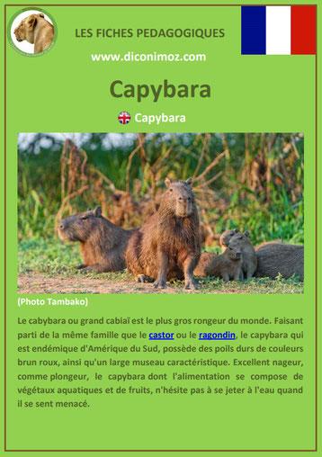 fiche animaux amazonie pdf pedagogique capybara cabiaï a telecharger et a imprimer